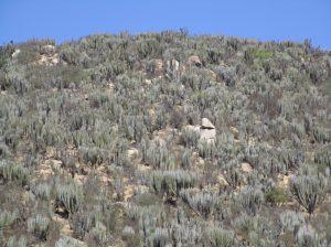 Abb. 5: Kakteenfelder in der Halb-Wüste des Kleinen Nordens